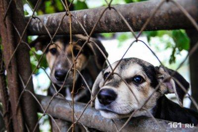 Ростовские зоозащитники: «Запрет возвращать животных на улицу после отлова — это зачистка перед ЧМ»
