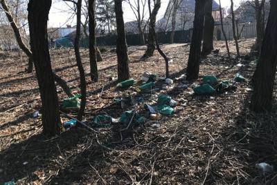 Из ростовских рощ после новогодних праздников вывезли 15 тонн мусора