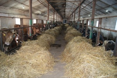 В Белокалитвинском районе посторили молочную ферму