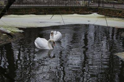 Белокалитвниский зоопарк продолжает работать даже зимой