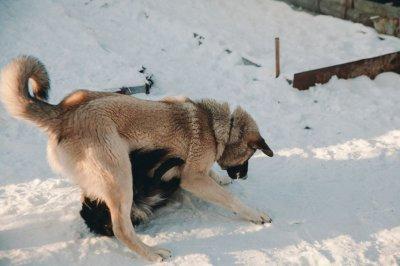 Под Ростовом мужчина погиб в результате нападения стаи собак