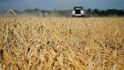 Россия к 2030 году увеличит производство зерна, масличных и картофеля