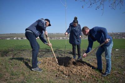 Более 1,5 тысячи белокалитвинцев вышли на улицы для высадки деревьев и кустарников