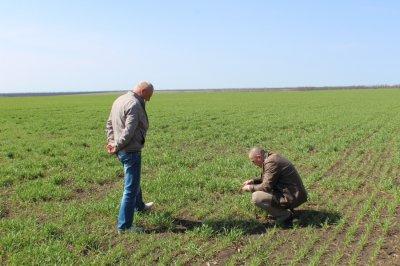 В Белокалитвинском районе продолжается посев