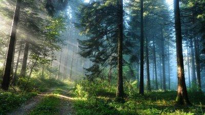 В Белокалитвинском районе проведена противопожарная опашка местных лесов