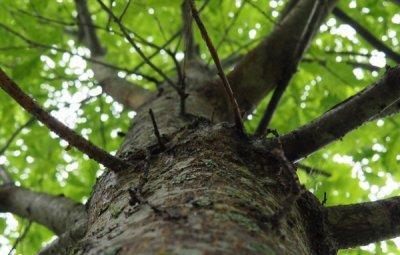 В Белой Калитве сняли с дерева мужчину который застрял на дереве