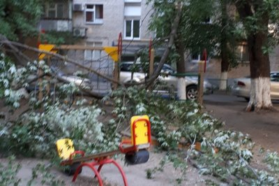 В Ростове на детскую площадку упало дерево