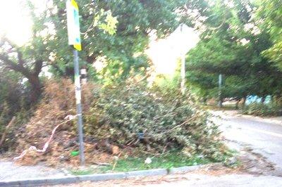«Древопад» в Ростове: в спальном микрорайоне упали несколько деревьев