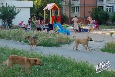В Ростове стая собак напала на детей