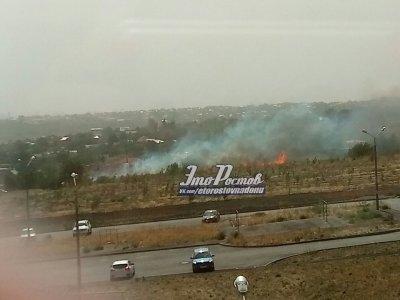 В Ростове на Суворовском сгорели молодые клёны в новом парке