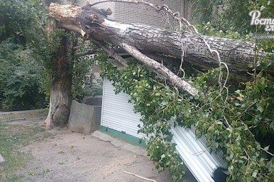 Разнесло продуктовый ларек: на улице Тимошенко упало старое дерево