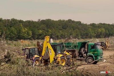 Кушнарев пообещал не вырубать оставшиеся деревья в Александровской роще