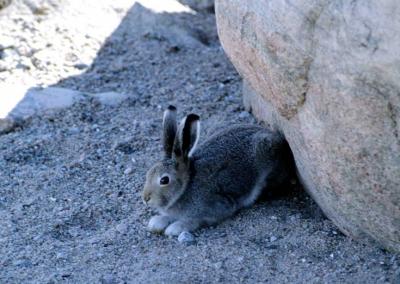На Дону открывается сезон охоты на зайца и лисицу