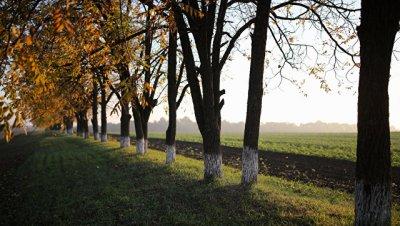 В Дагестане высадят более пяти тысяч деревьев разных пород