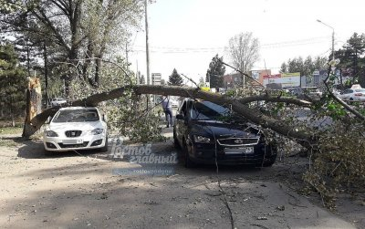 В донской столице из-за сильного ветра дерево упало на машину