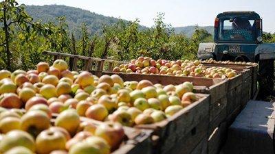 Эксперт прокомментировал запрет на ввоз яблок и груш из Белоруссии