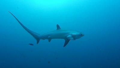 В США акула напала на восьмилетнего мальчика