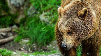 В США медведь устроил пожар в полицейской машине