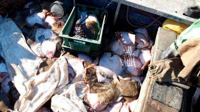В ФСБ сообщили, что украинские браконьеры готовятся к отправке домой