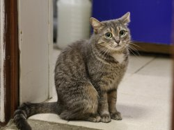 10 когтеточек для котов