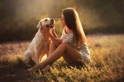 Намордники для собак