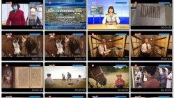 Выпуск информационной программы Белокалитвинская Панорама от 13 октября 2020 года
