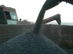 Донские аграрии собрали 1 миллион 693 тысячи тонн подсолнечника