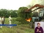 В рамках спецоперации 'Мак-2006' наркополицейские Ростовской области уничтожили 200 тонн конопли
