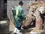 Три новых случая птичьего гриппа в Египте