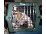 Содержавших 11 приемных детей в клетках супругов признали виновными