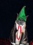 Новогодние коты (15 фото)