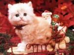 Хакеры рассылают новогодние открытки