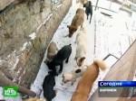 Безпризорные псы нашли себе дом