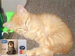 Австралийский банк выдал коту кредитную карту