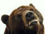 В Московском зоопарке уснули медведи