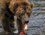 Медведи в московском зоопарке наконец-то впали в спячку
