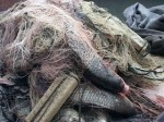 Сотрудники рыбнадзора в Таганрогском заливе обнаружили сотни метров браконьерских сетей