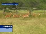 В России отмечают день заповедников и национальных парков