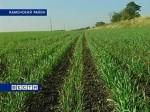 Минсельхоз Ростовской области: теплая погода не повлияет на урожай озимых