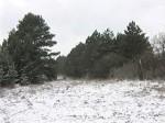 В Ростовской области создан департамент лесного хозяйства
