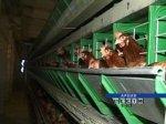 Вспышек птичьего гриппа в России не зафиксировано. В Ростовской области ситуация под контролем