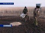 Теплая зима в Ростовской области: птицы на юг не улетели