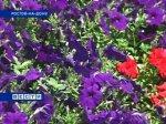 В Ростове-на-Дону высадили миллион цветов
