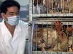 """В Японии подтверждена новая вспышка """"птичьего гриппа"""""""