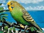 Казахские пограничники конфисковали 500 контрабандных попугаев