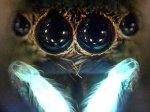 Ультрафиолет помогает паукам спариваться