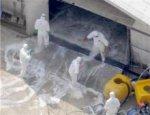 Япония подтвердила вспышку птичьего гриппа