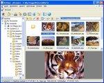 XnView 1.90: смотрим всё, быстро и удобно