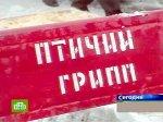 Молдавия запретила несуществующий ввоз мяса птицы из России