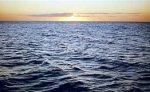У побережья Сахалина на льдинах в море уносит еще 100-120 человек
